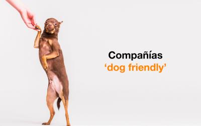 Las ventajas de trabajar en una compañía 'Dog Friendly'